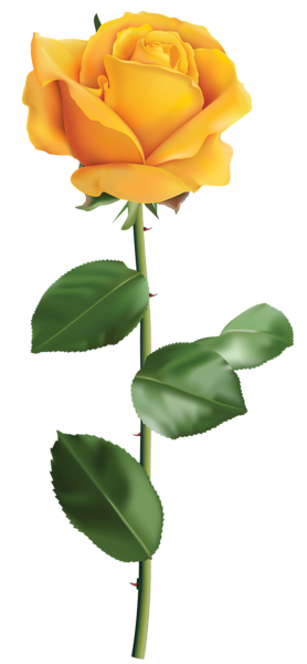Rose with thorns png. Yellow transparent clip art