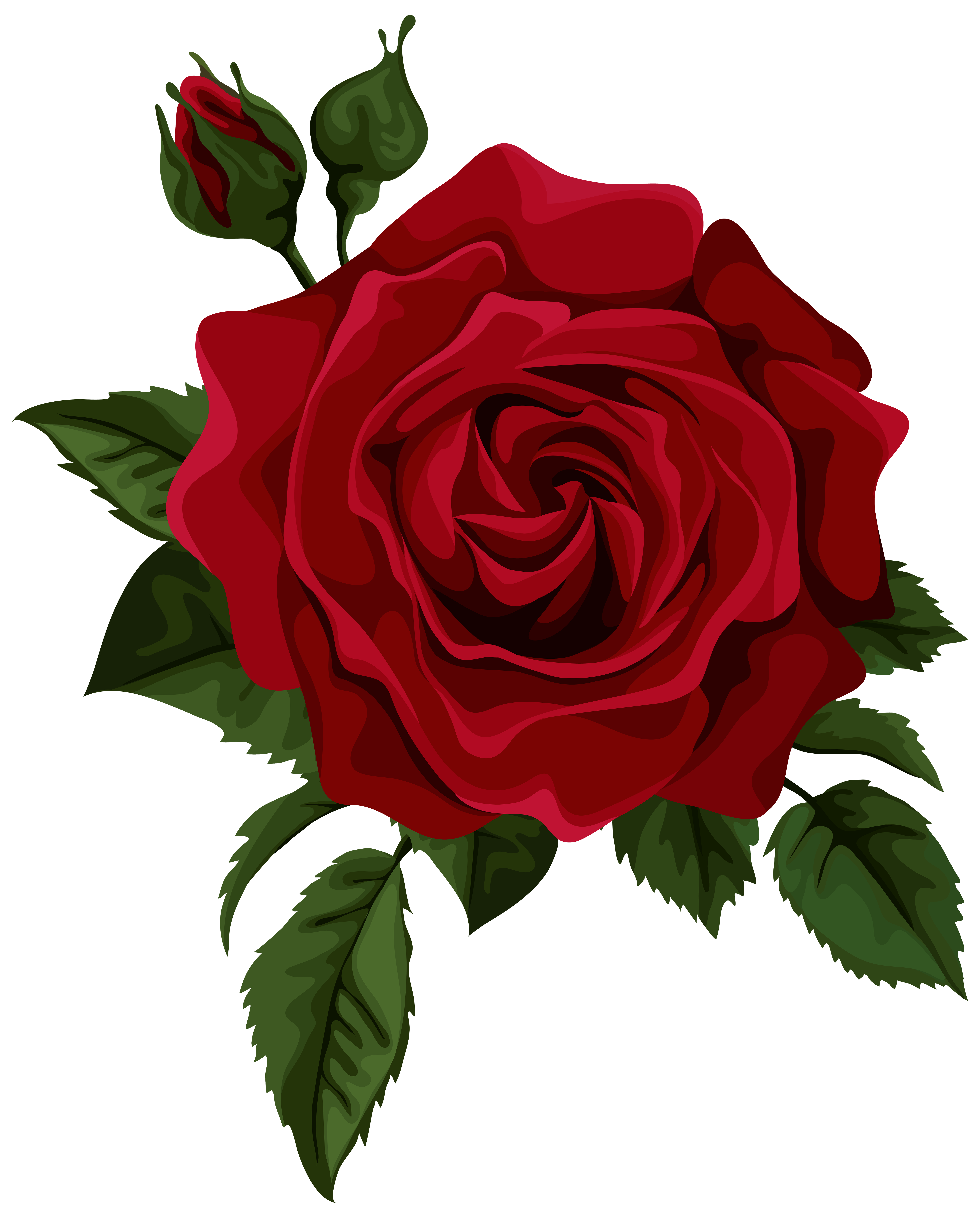 Rose with thorns png. Roses red bud transparent