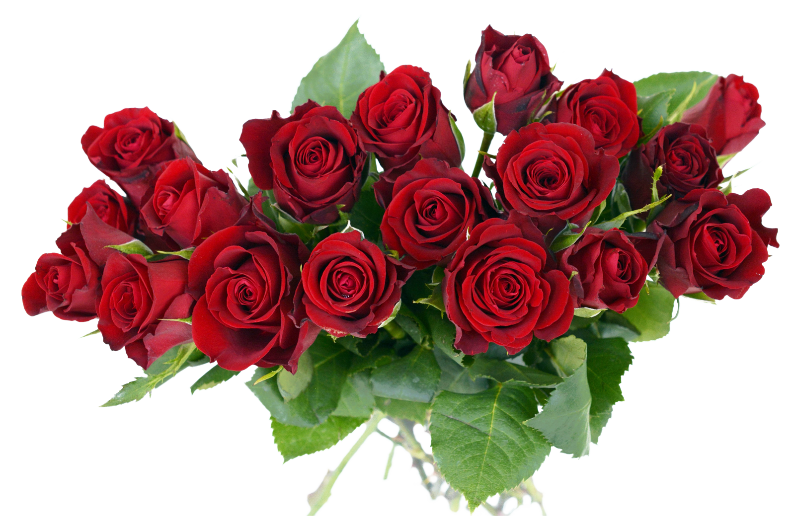 Rose flowers png. Bouquet image purepng free