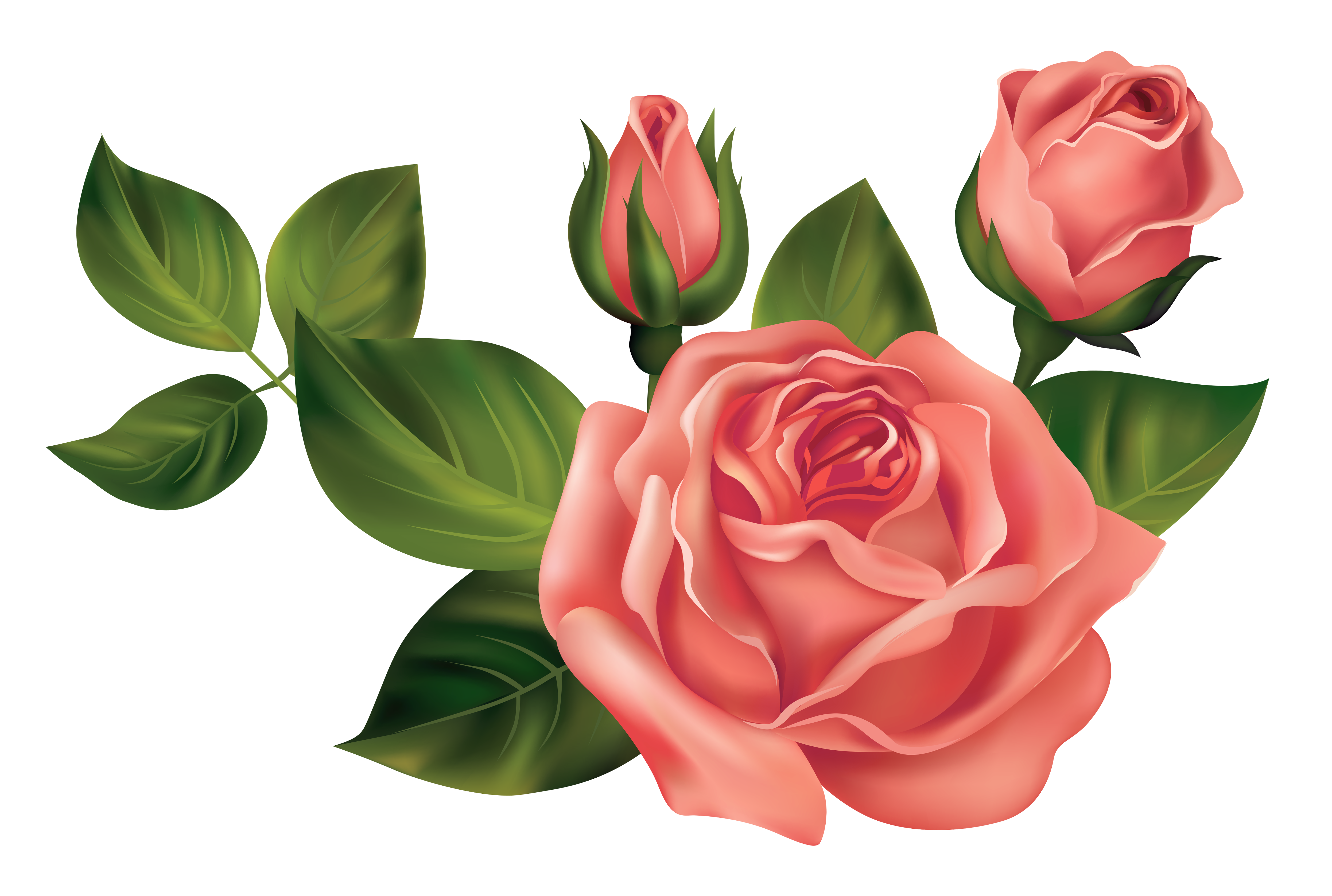 Roses clipart. Transparent png picture gallery