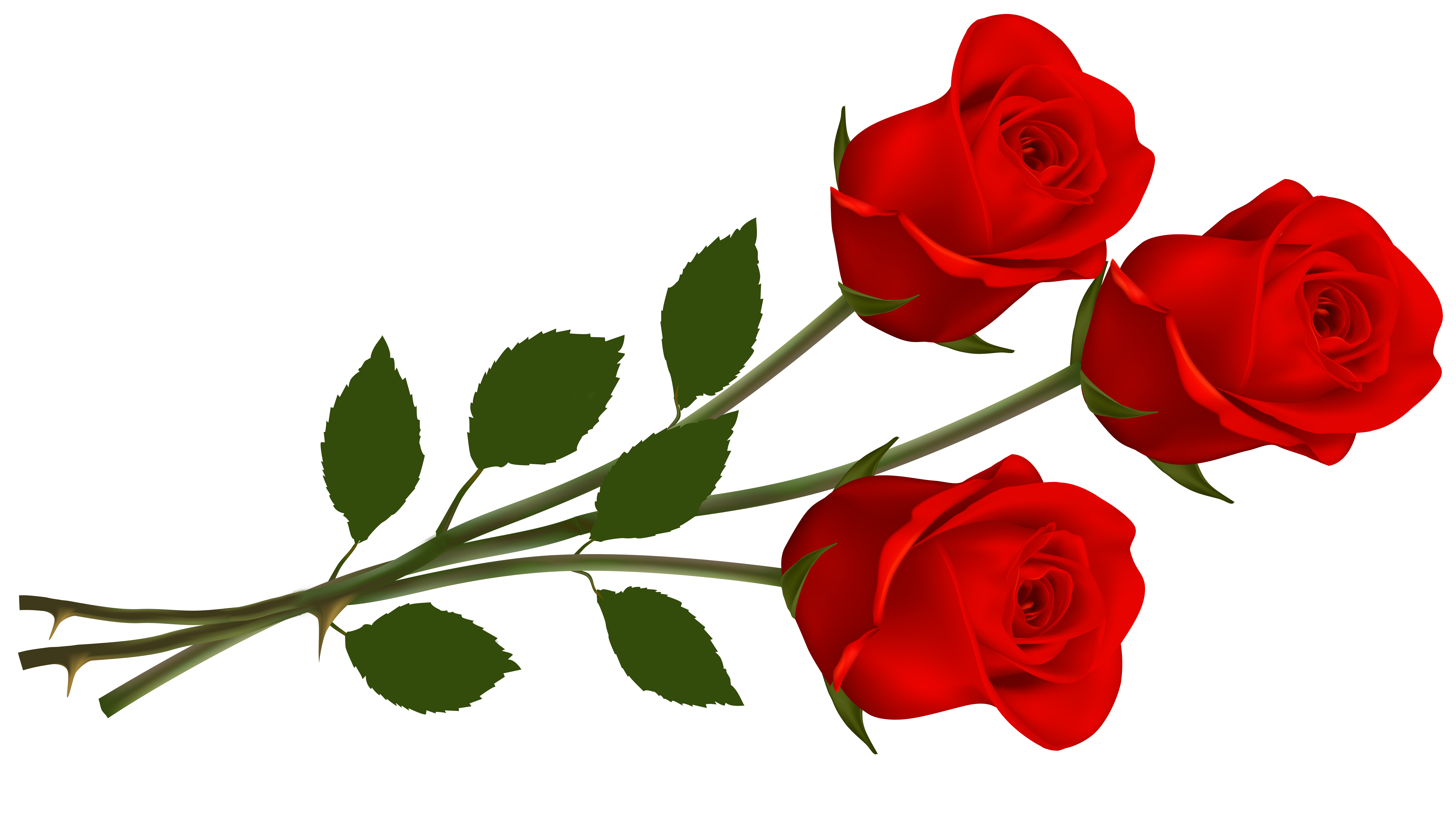 Large red roses png. 3 clipart rose picture library