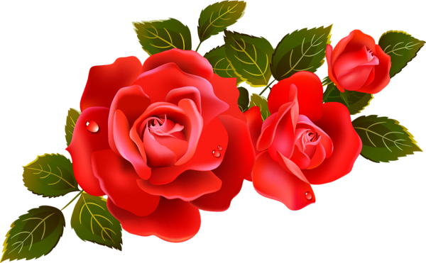 Red rose flower png. Large roses clipart element