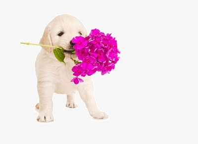 Roses clipart dog. I will send a