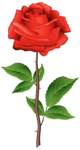Stem red png clipart. Rosas vector rose image royalty free download