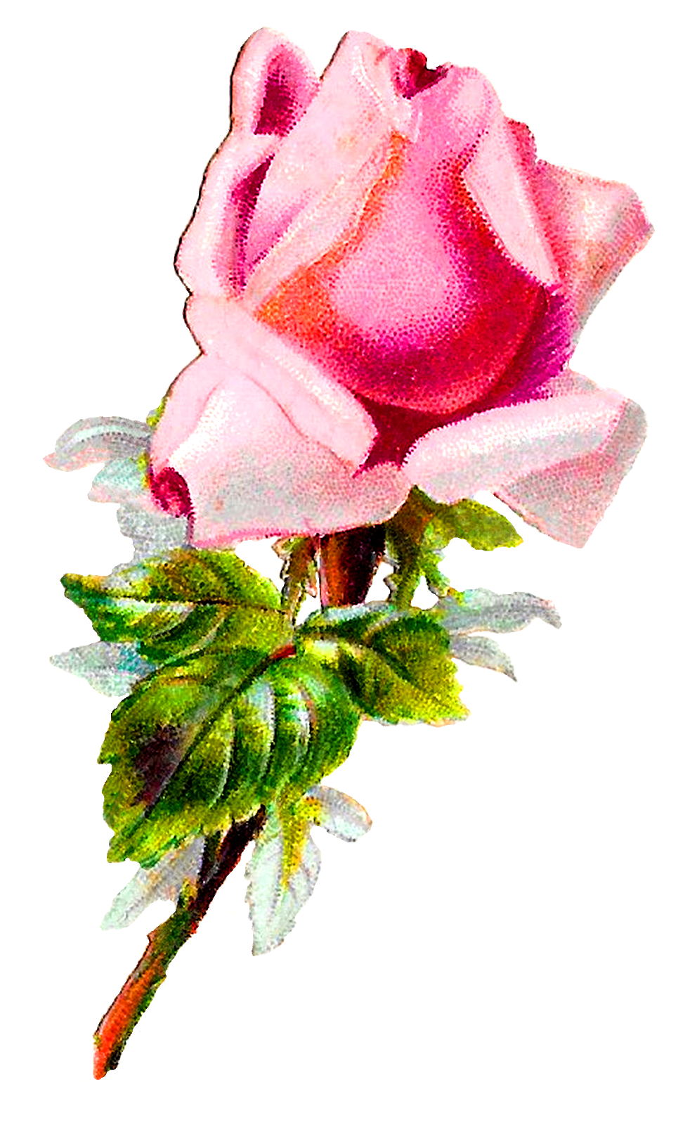 Roses clipart shabby chic. Antique images pink flower