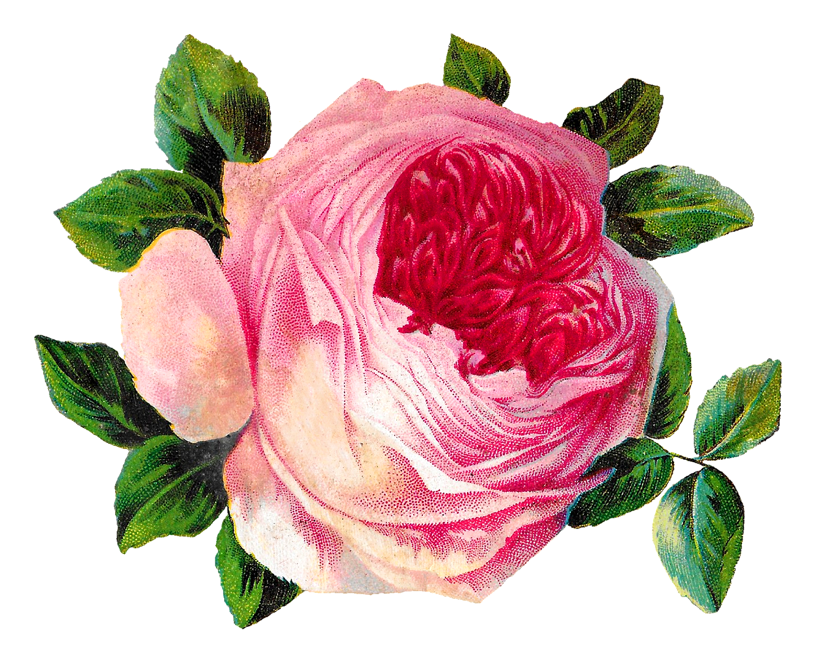 Roses clipart shabby chic. Antique images free pink