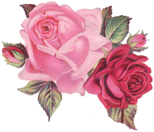Roses clipart shabby chic. Pin by costanza carbone
