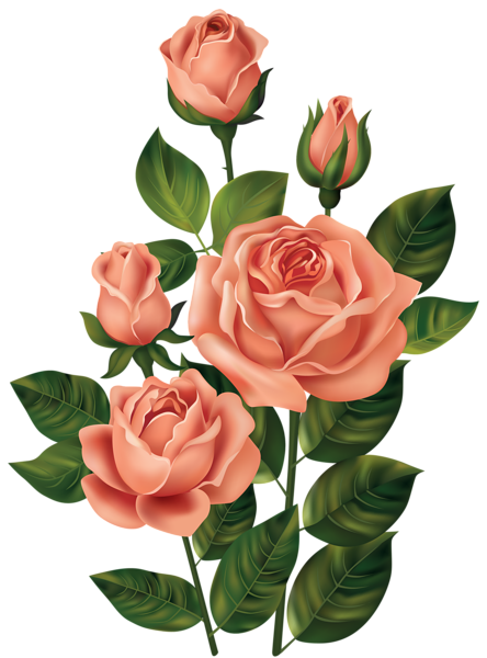 Roses png. Clipart image kedvenceim pinterest graphic black and white download