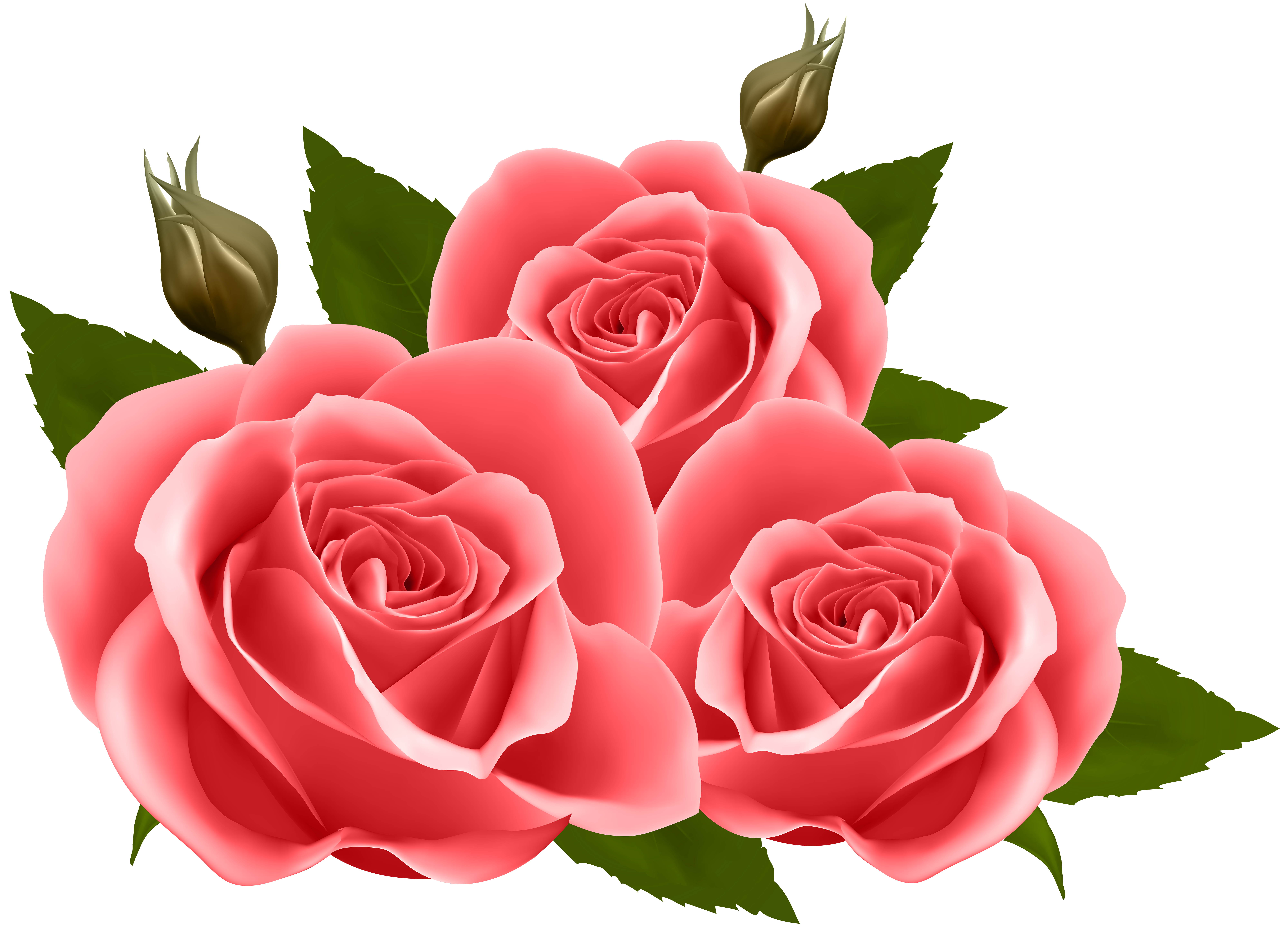 Roses png. Red clip art image