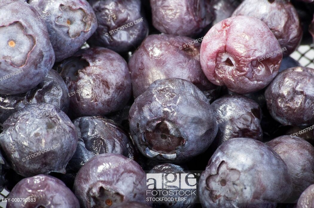Rotten blueberry. Blueberries close up stock