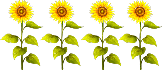Row clipart sunflower. Popular and trending stickers