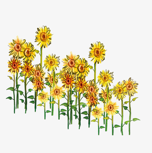 Row clipart sunflower. A of sunflowers yellow