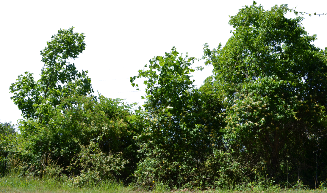 Row of trees png. Download bushes banner library