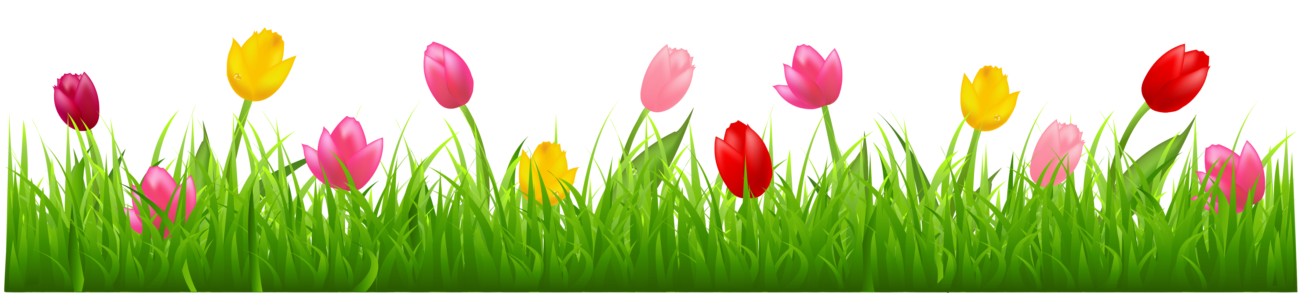 Grass with colorful tulips. Row of flowers png banner transparent download