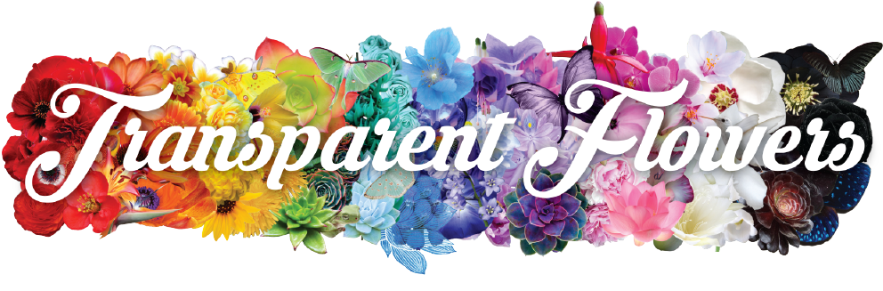 Row of flowers png. Download banner transparent bouquet