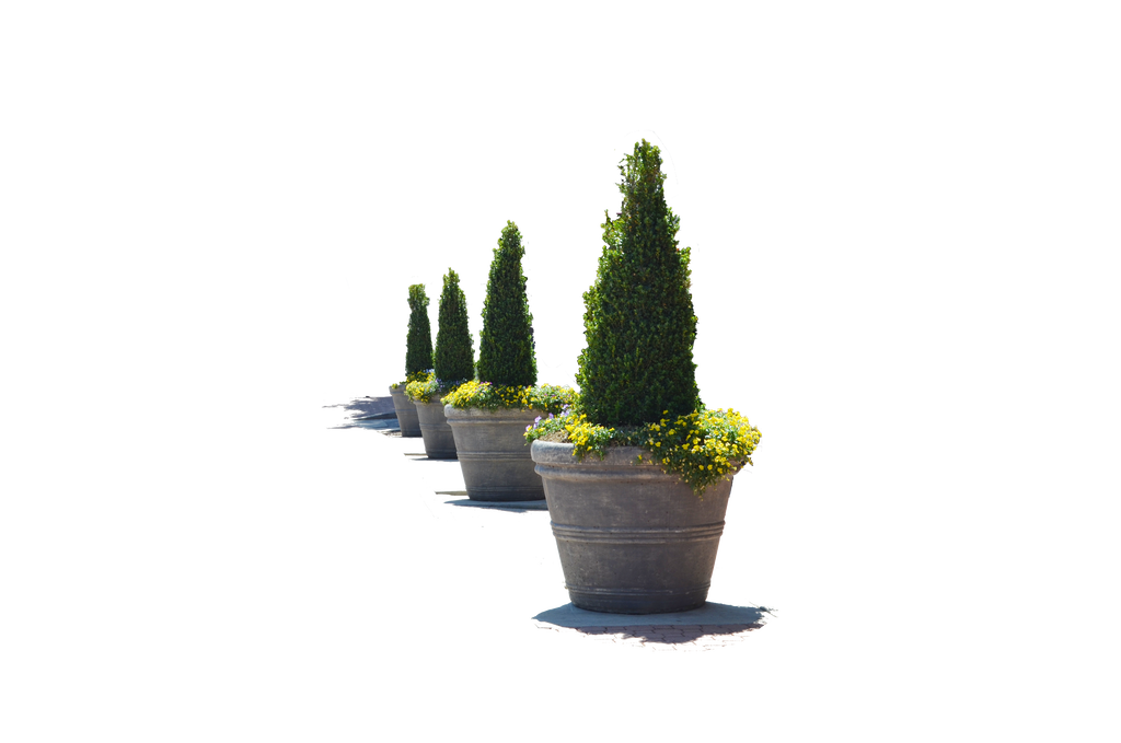 Row of flowers png. Flower pots in a