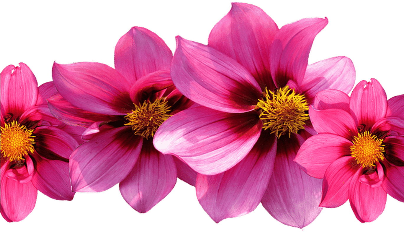 Row of flowers png. Download hd for free