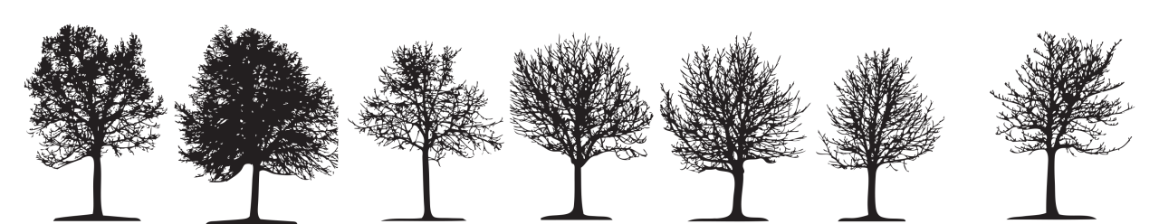 Row of trees png. Tree services and treecare