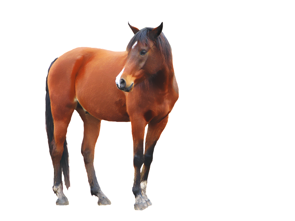 Running horse png. Image free download picture