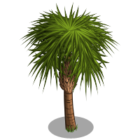 Sabal palm png. Tree farmville wiki fandom