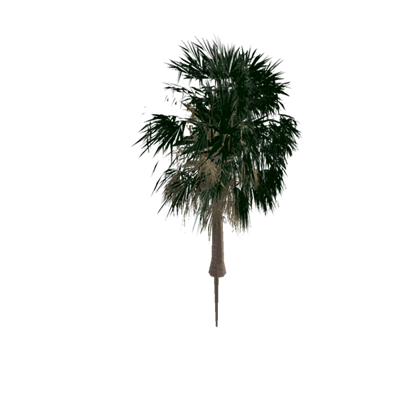 Sabal palm png. Short roblox