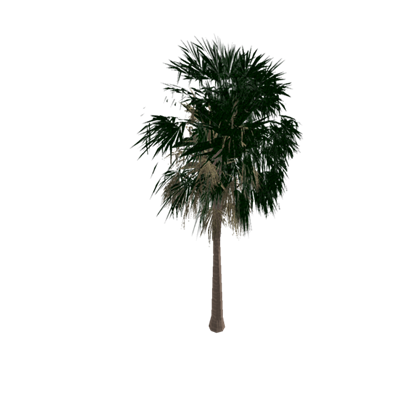 Sabal palm png. Unoptimized palmetto tree roblox