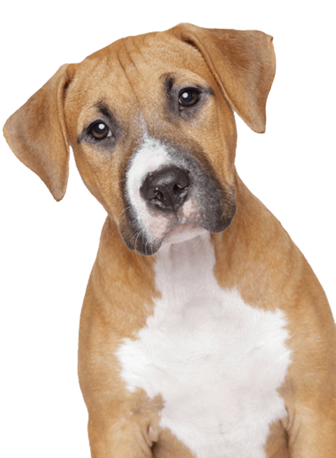 Sad animals png. Dog transparent stickpng dogs