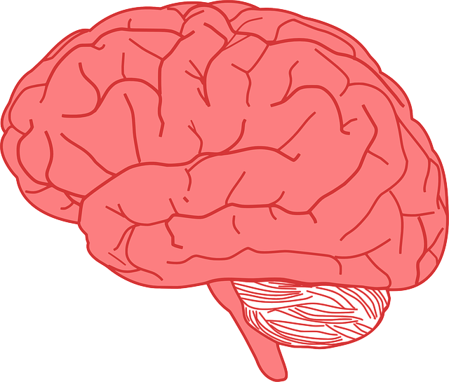 Sad clipart brain. Facts about the human
