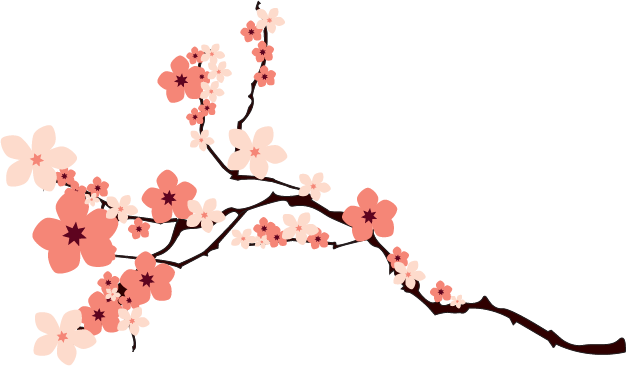 Cherry blossom png. Sakura images free download