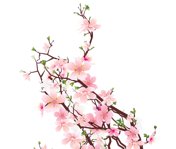Sakura flowers png. Collection of free blossomed