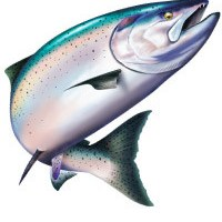 Salmon clipart clear background. Original mary tracy illustration