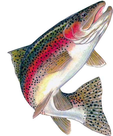 Trout clipart. Download hd food fish