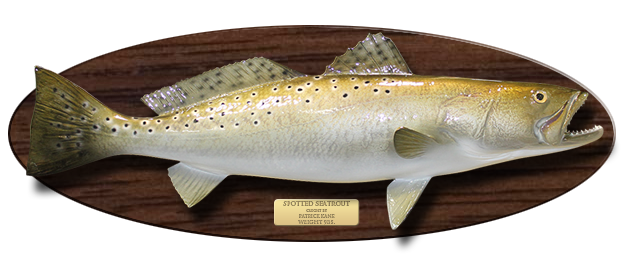 Salmon mount png. Wood plaque fish action