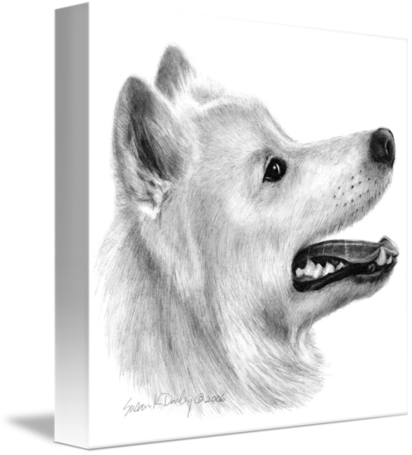 Samoyed drawing. By susan donley