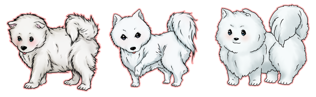Samoyed drawing. Teach me how to