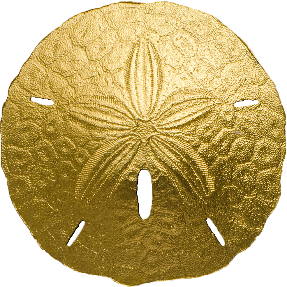 Sand dollar png. Palau small gold numiscollect