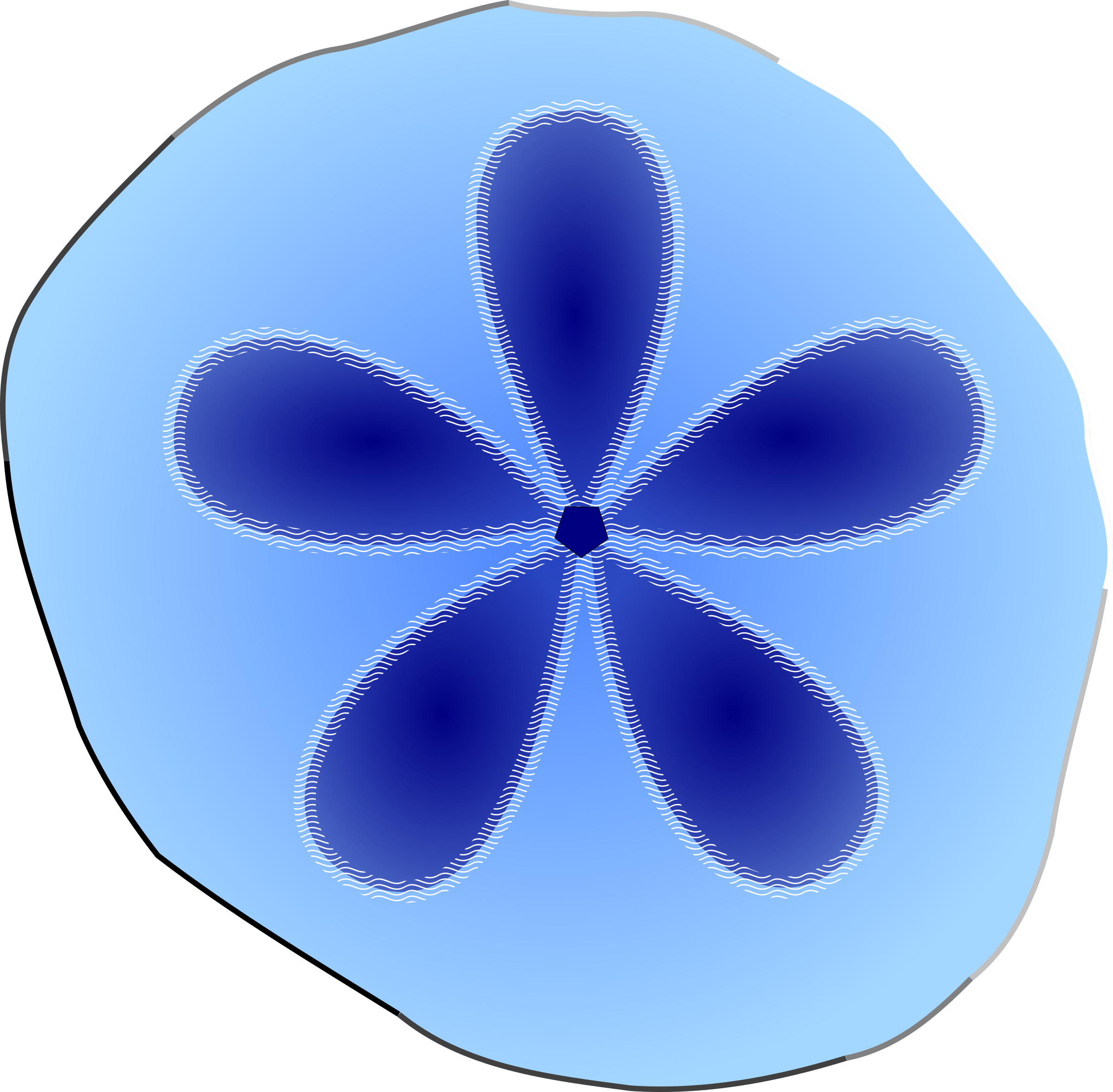 Sand dollar png. Icons free and downloads