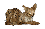 By spiritwollf on deviantart. Savannah drawing cat picture transparent download