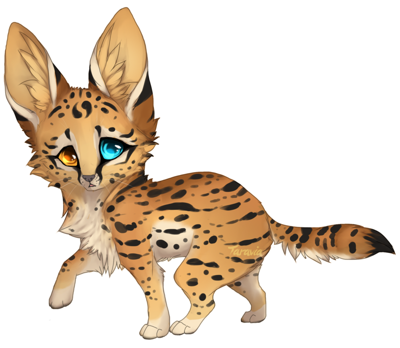 Savannah drawing serval cat. Auction baby adoptable by