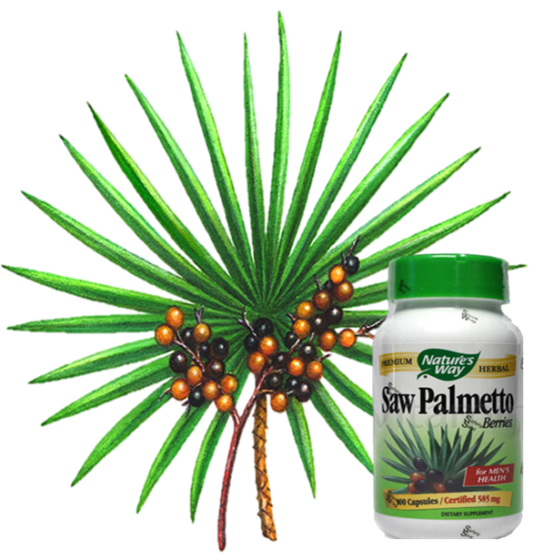 Saw palmetto png. Does work for androgenetic