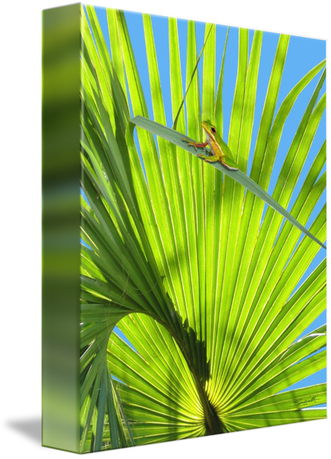 Saw palmetto png. And frog by i
