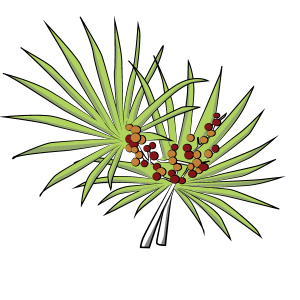 Saw palmetto png. Can treat an enlarged