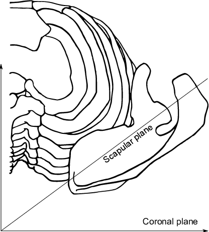 The scapular plane at. Scapula drawing vector freeuse stock