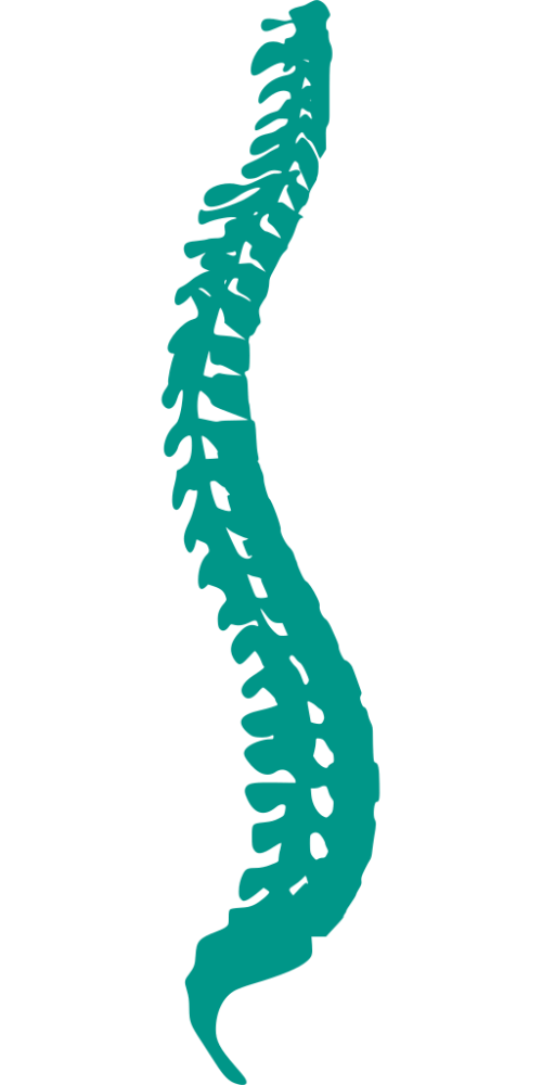 Spine clipart cracked. Chiropractor in mount prospect
