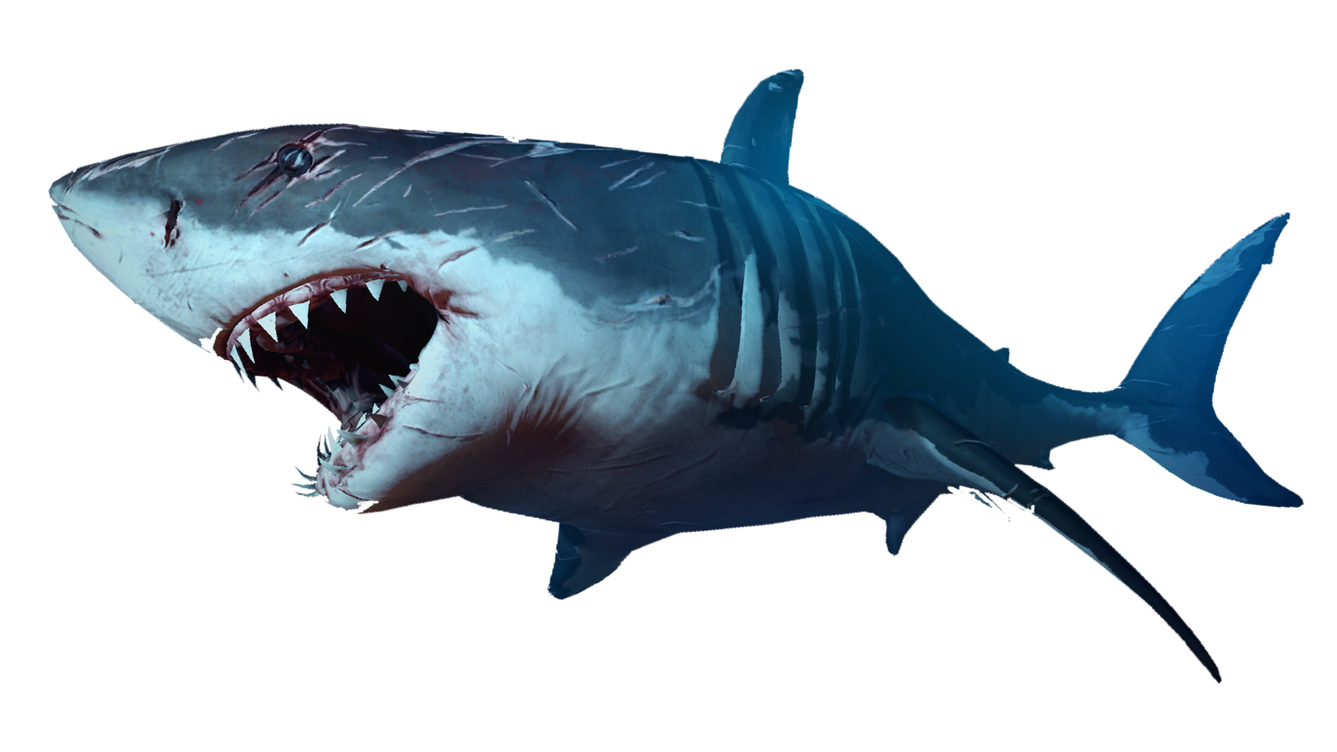 Shark mouth open png. Scary sharks image picpng