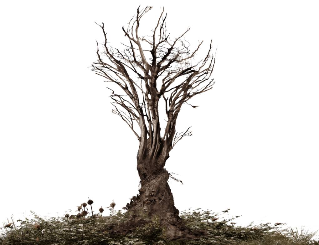 Creepy tree png. Twisted scary stock photo