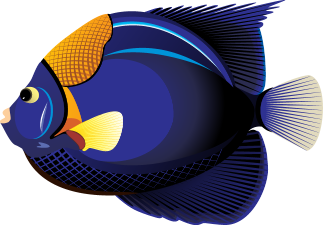 School of at getdrawings. Fish clipart png graphic library library