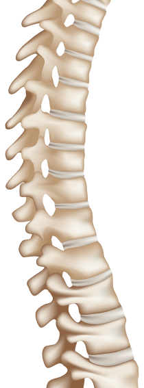 Scoliosis spine png. Atlas