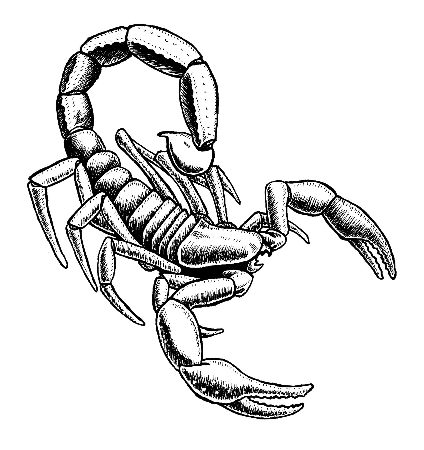 Scorpion clipart easy. How to draw wikiclipart