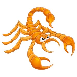Scorpion clipart scorpion sting. Ever hear that scorpions
